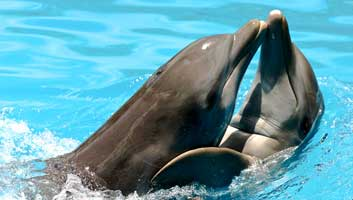 Dolphins not happy swimming with sick people