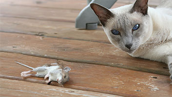 Cat to present dead mouse for third time
