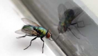 Thumbnail image for Fly who won't obey simple instruction to go out window must be some sort of idiot