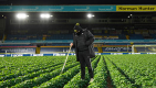 Thumbnail image for Leeds United celebrate as Elland Road potato harvest finally ready