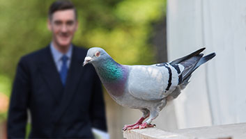 rees-mogg carrier pigeon delivery of letter of no confidence